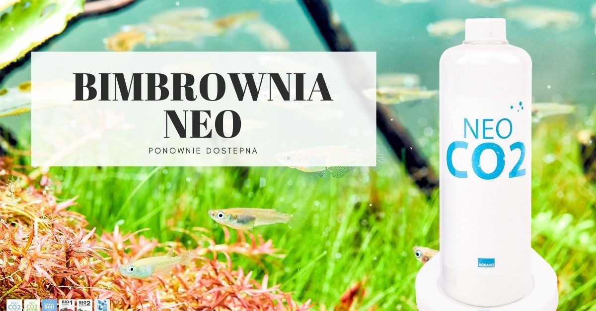 Neo CO2 System Bimbrownia